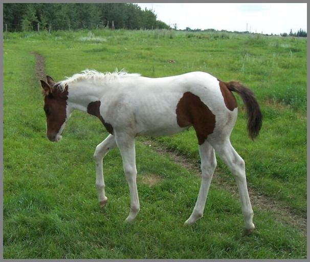 Poco Jetta Bar McCue -2012 Bay tobiano filly out of GG Jet Bar McCue