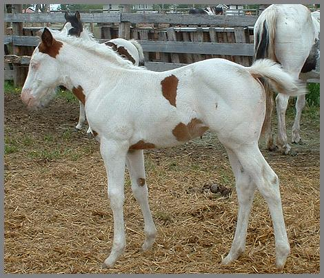 Friday Night Encore - 2005 Bay Tovero Filly out of Friday Night Disco