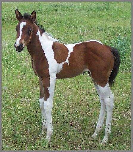 Royal Blitz N Bling -2012 Bay  tobiano filly out of Royal Apache Smoke Em