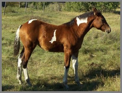 Poco Carmelita QT - 2013 Bay Filly out of Moon Chief Jewels